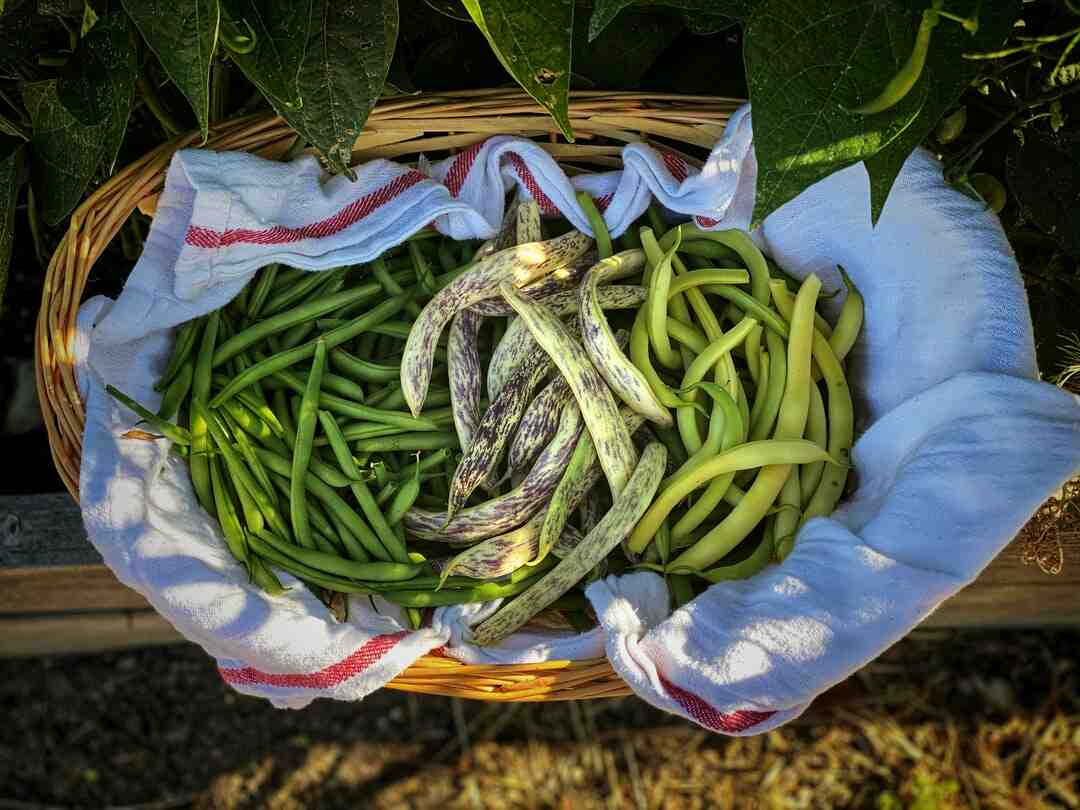 Comment blanchir des haricots verts
