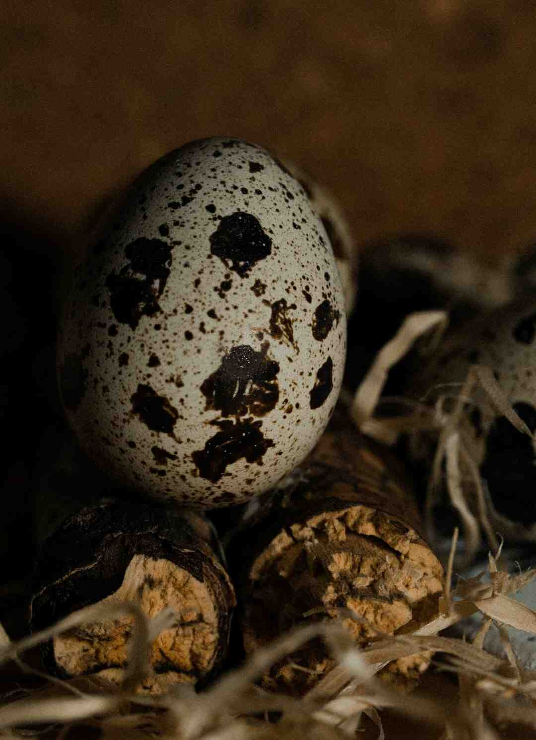 Comment manger des œufs de caille